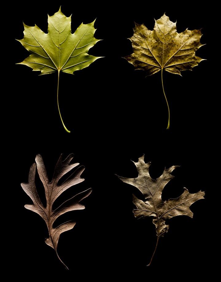 leaves together